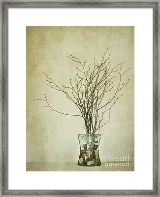 Spring Unfolds Framed Print by Priska Wettstein