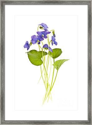 Spring Violets On White Framed Print by Elena Elisseeva