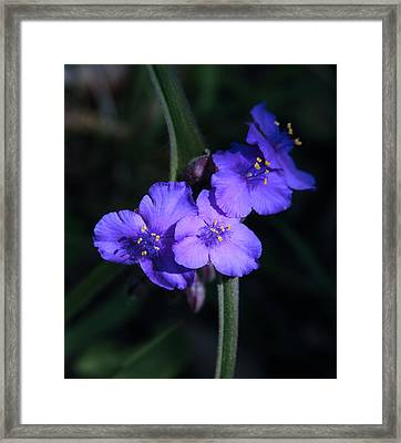 Spring Wildflowers At Hot Springs National Park Framed Print by Brian M Lumley