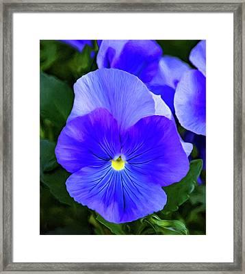 Springtime Blues 2 - Paint Framed Print by Steve Harrington