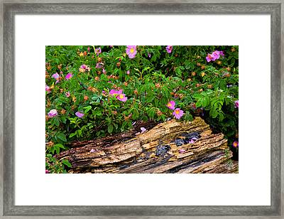 Springtime In New York Framed Print by Brad Hoyt