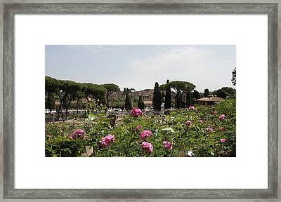 springtime in Rome Palatino from rose garden 1 Framed Print by Daniele Chiarottini