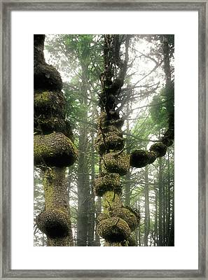 Spruce Burl Olympic National Park Beach 1 Wa Framed Print by Christine Till