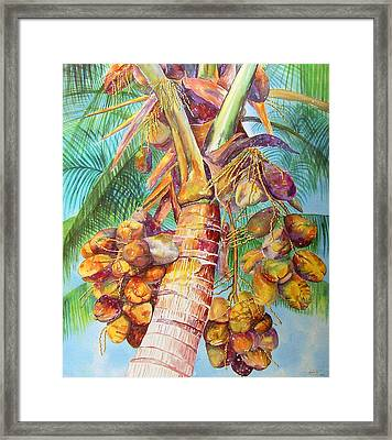 Squire's Coconuts Framed Print by AnnaJo Vahle