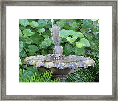Squirrel At The Birdbath Framed Print by Richard Rizzo