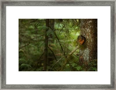 Squirrel Breaks The Silence Framed Print by Lisa Knechtel