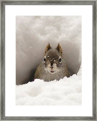 Squirrel In A Snow Tunnel Framed Print by Stanza Widen