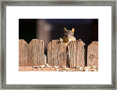 Squirrel On The Fence Framed Print by James BO  Insogna