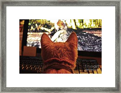 Squirrely Cat  Framed Print by JW Hanley