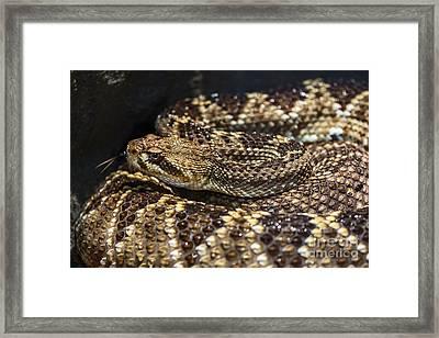 Sssssnake Framed Print by Jamie Pham