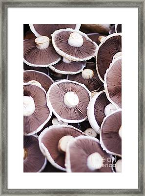 Stacked Mushrooms Framed Print by Jorgo Photography - Wall Art Gallery