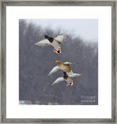Stacked Framed Print by Robert Pearson