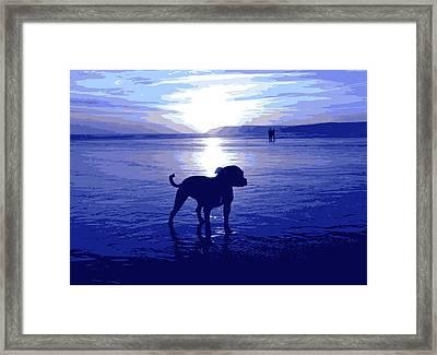 Staffordshire Bull Terrier On Beach Framed Print by Michael Tompsett