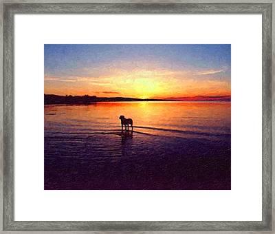Staffordshire Bull Terrier On Lake Framed Print by Michael Tompsett