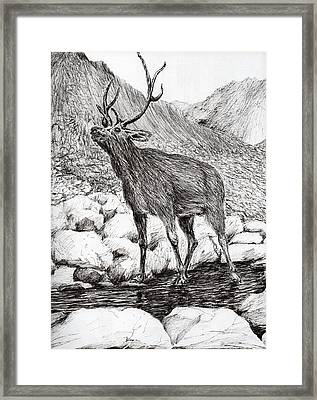 Stag Framed Print by Vincent Alexander Booth