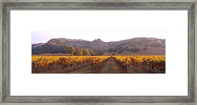 Stags Leap Wine Cellars Napa Framed Print by Panoramic Images