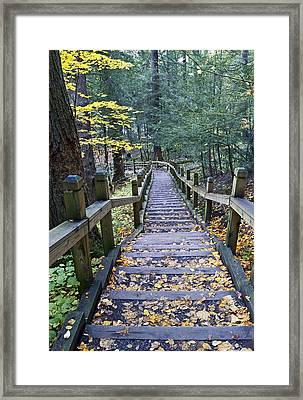 Staircase At Swallow Falls State Park Maryland  Framed Print by Brendan Reals