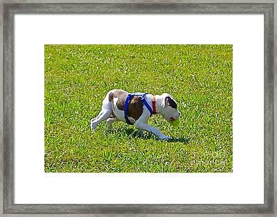Stalking Framed Print by E Robert Dee