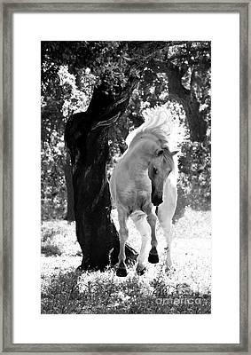 Stallion Dances Framed Print by Carol Walker