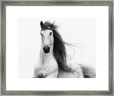 Stallion's Glory Framed Print by Carol Walker