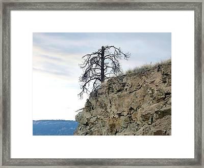 Stalwart Pine Tree Framed Print by Will Borden