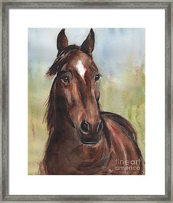 Standardbred Horse Head Framed Print by Maria's Watercolor