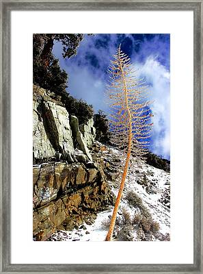 Standing Alone Framed Print by Nick Frazier