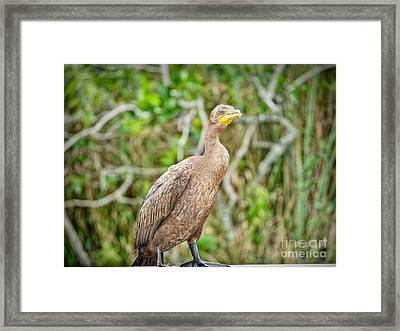 Standing Ground Framed Print by Judy Kay