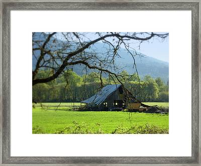 Standing Still Framed Print by Cindy Wright