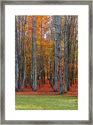 Standing Tall On The Natchez Trace Framed Print by T Lowry Wilson