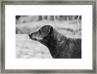 Standing Watch Framed Print by Donna Blackhall