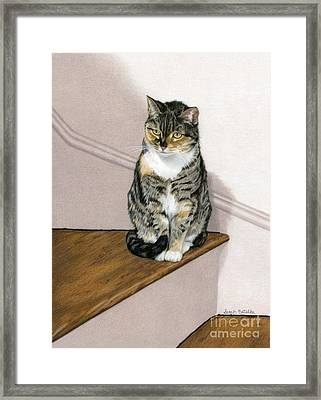 Stanzie Cat Framed Print by Sarah Batalka