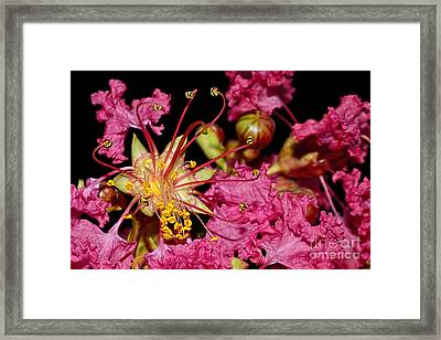 Star Burst Stamen By Kaye Menner Framed Print by Kaye Menner