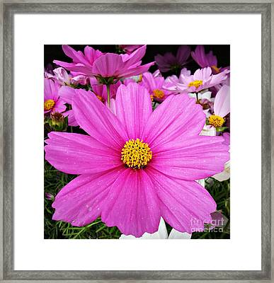 Star Framed Print by Chalet Roome-Rigdon