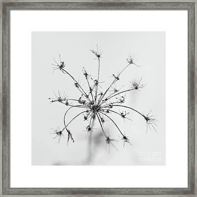 Star Framed Print by Gabriela Insuratelu