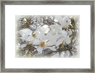 Star Magnolia Blossoms Framed Print by Sandy Keeton