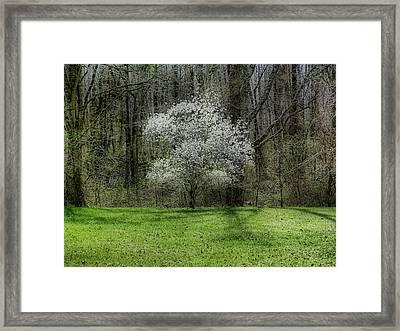 Star Magnolia Tree Framed Print by Sandy Keeton