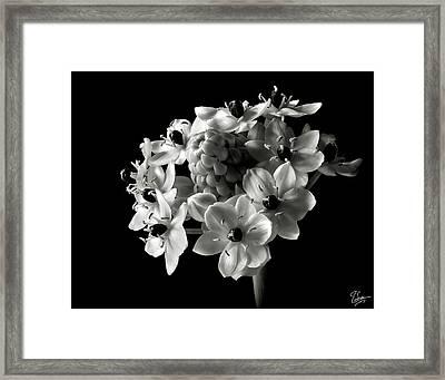 Star Of Bethlehem In Black And White Framed Print by Endre Balogh
