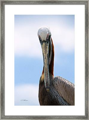 Stare Down Framed Print by Christopher Holmes