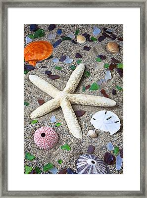Starfish Beach Still Life Framed Print by Garry Gay