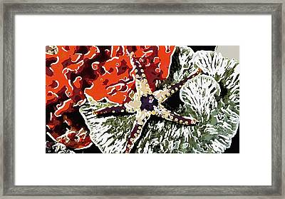 Starfish In Coral Reef 7 Framed Print by Lanjee Chee