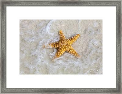 Starfish Framed Print by Janet Fikar