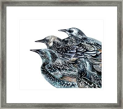 Starlings Framed Print by Marie Burke
