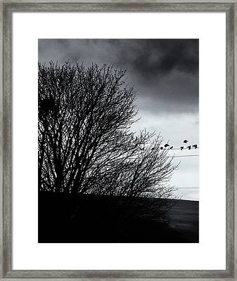 Starlings Roost Framed Print by Philip Openshaw