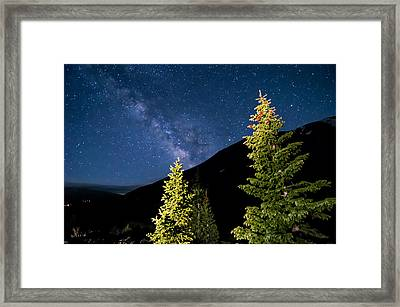 Stars Above Trees Framed Print by Michael J Bauer