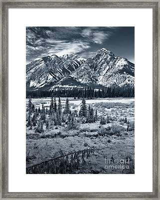 Starting To Look A Lot Like Christmas Framed Print by Royce Howland