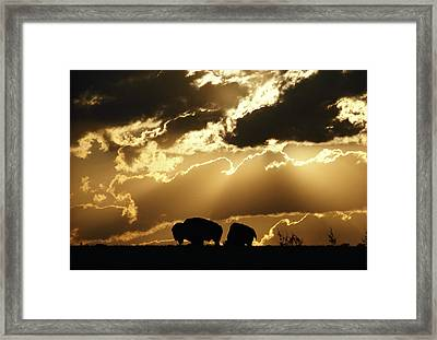 Stately American Bison Framed Print by George F. Mobley