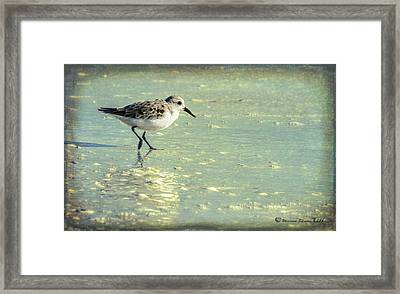 Staying Focused Framed Print by Marvin Spates