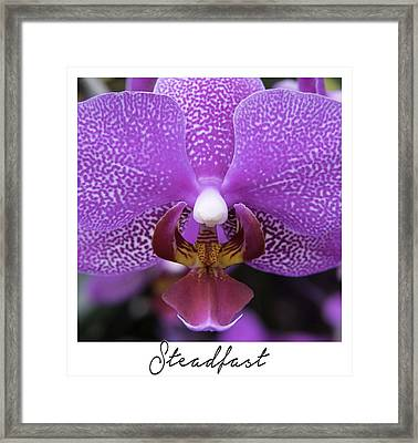 Steadfast Framed Print by Janet Fikar