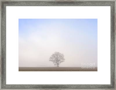 Steadfast Framed Print by Richard Thomas